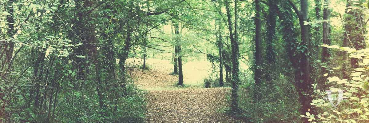Immagine di un bosco.