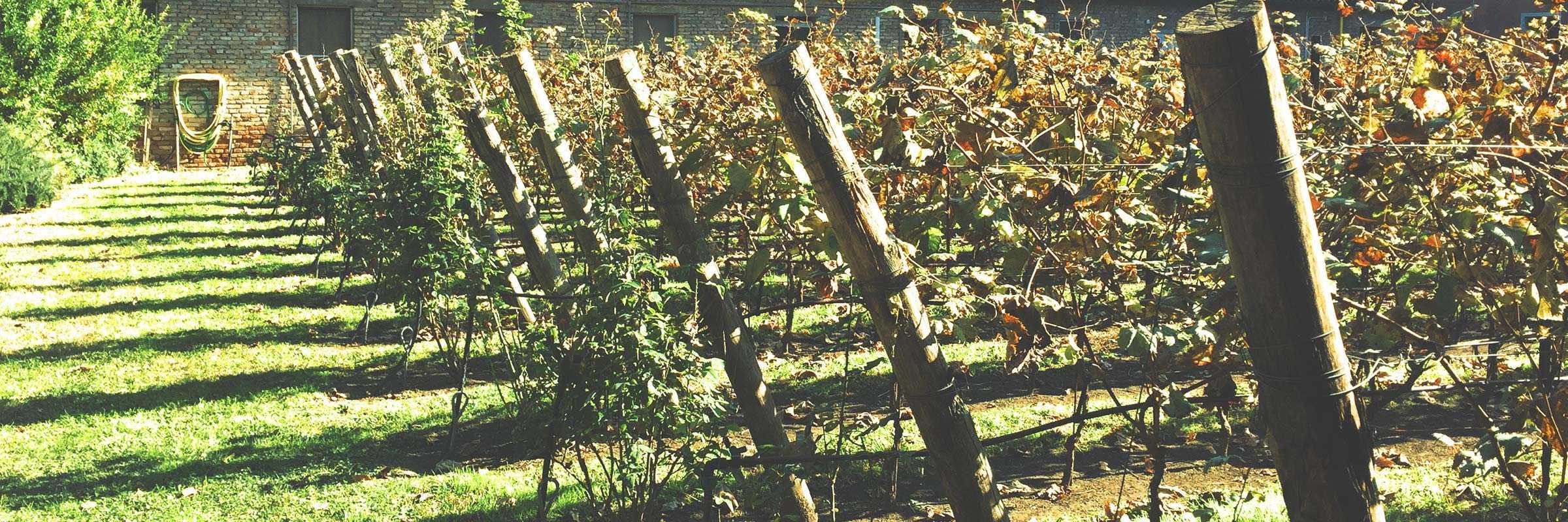 La vigna rinata, di San Francesco della Vigna — (Archivio Venipedia/Bazzmann)