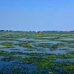 13 giugno 2013 - Le alghe sono già in superificie - Zampedri