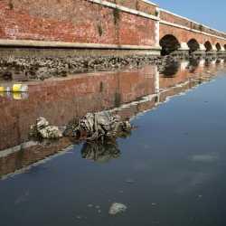21 luglio 2013 - Morìa vicino al Ponte della Libertà - Barzizza