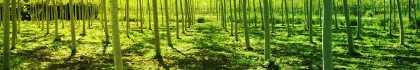 Foto di un bosco verde.