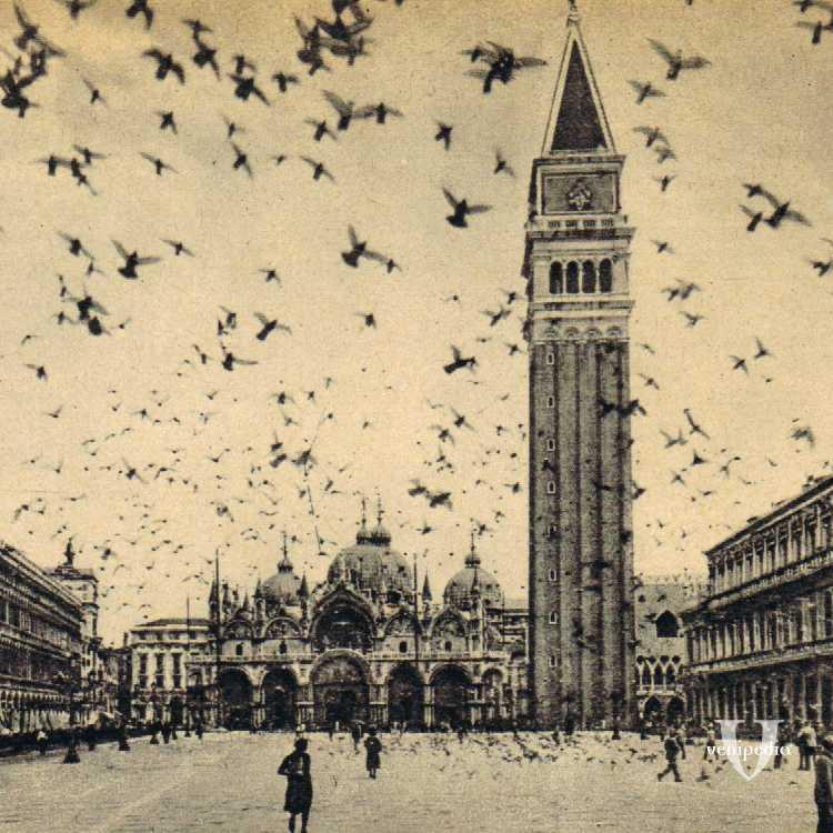 I piccioni in piazza San Marco, elemento tipico e ormai imprescindibile, nel centro storico della città.