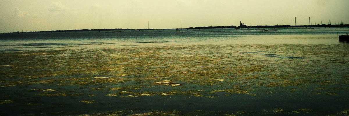 Panoramica della laguna di Venezia verso Porto Marghera con le alghe in affioramento.