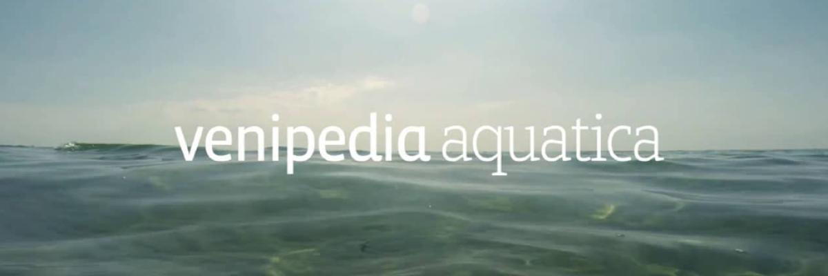 Venipedia Aquatica