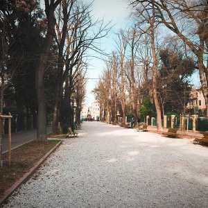 Il viale alberato di Viale Garibaldi. — (Archivio Venipedia/Bazzmann)